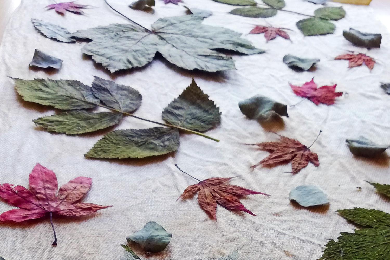 Getrocknete Blätter auf einem Stoff aufgelegt